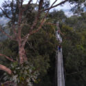 Ulu Temburong National Park Tree Top Walk