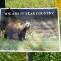 Bears - What Bears