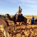 Tpr OG Camelrider