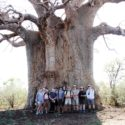 The group in front of a massive Baobab Tree