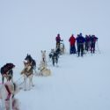 Meeting up with the dog sled team