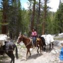 Gnr Courtney Evans, The Kings Troop leading her horse and mule into Wallace Creek for the resupply