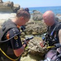 Sgt Jodie Mills of 34 Field Hospital conducts a pre dive BAR (Bouyancy, Air & Releases) check with dive buddy WO1 Paul Rowlands during Ex NEPTUNE SERPENT 17
