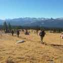 Tuolumne Meadows, parched grass alluding to the heat of this stage of the trek