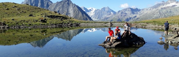 Alpine Eldelweiss 2019